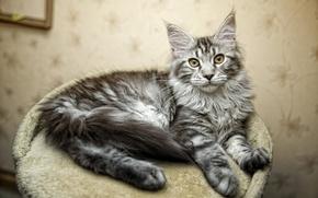 Картинка кошка, фотограф, photography, photographer, cat, Евгений Апин, Evgeniy Apin