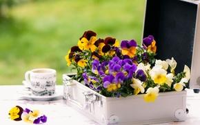 Картинка цветы, стол, чашка, кейс, фиалки