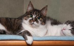 Картинка кошка, кот, кошки, коты, пара, спит, смотрит