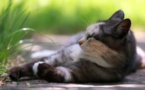 Картинка кошка, трава, отдых