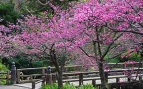 Обои цветы, деревья, лепестки, весна, сакура