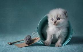 Картинка кошка, котенок, голубой, игрушка, игра, обработка, пушистый, мышь, мышка, мелкий, ведро, сидит, милашка, ведерко, голубоглазый, …