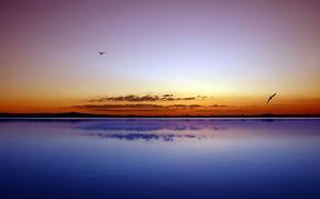 Картинка море, вода, птицы, океан, пейзажи, красота, вечер
