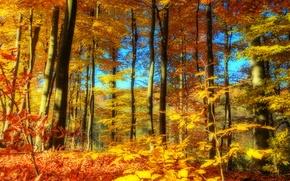 Картинка осень, лес, небо, деревья, пейзаж, природа, время года