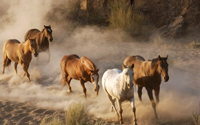 Картинка песок, скалы, кони, пыль, лошади, коричневые, табун, скачут, обои от lolita777