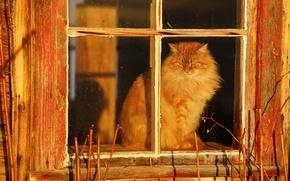 Обои деревня, кошка, пушистая, окно