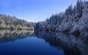 Обои winter, forest lake, cold, white