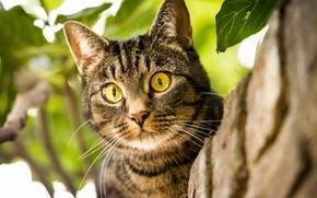 Картинка кошка, кот, взгляд, мордочка, глазища