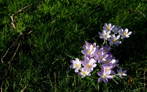 Картинка трава, цветы, природа, растения