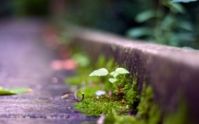Картинка дорога, трава, макро, растение, росток, зеленое, боке