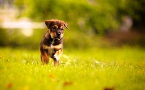 Картинка щенок, травка, собачка