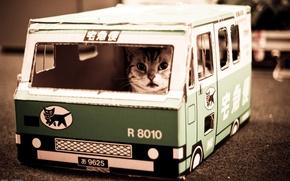 Обои котик, Nekobasu, кошачий автобус