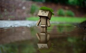 Картинка вода, лист, отражение, дождь, коробка, Danbo, amazon, коробок