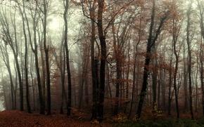 Картинка Осень, forest, туман, деревья, autumn, тропа, fog, trees, лес