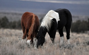 Обои трава, лошадь, пара, прогулка