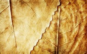 Картинка осень, листья, фон, желтые, сухие