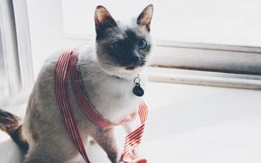 Картинка eyes, cat, window