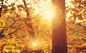 Картинка широкоэкранные, день, HD wallpapers, обои, tree, листья, дерево, полноэкранные, солнце, background, ветки, fullscreen, макро, лучи, ...