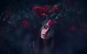 Картинка девушка, розы, Lichon, Piekny