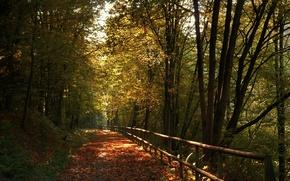 Картинка осень, деревья, листва, colors, дорожка, trees, Autumn, leaves, pathway, fall