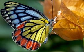 Картинка осень, листья, природа, бабочка, краски, цвет, мотылек