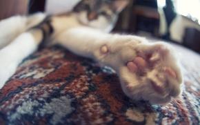 Картинка кошка, кот, лапа, ковёр, cat, paw
