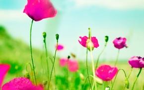 Обои зелень, цветы, фон, розовый, обои, размытие, wallpaper, цветочки, широкоформатные, flowers, background, полноэкранные, HD wallpapers, широкоэкранные