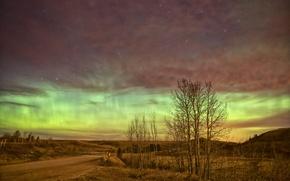 Картинка дорога, небо, звезды, деревья, ночь, сияние