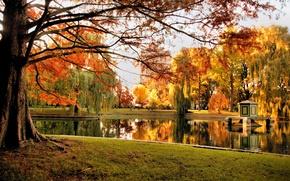 Картинка осень, деревья, природа, пруд, парк, США, Бостон, trees, nature, Boston, park, autumn, pond, fall