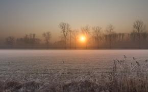 Картинка зима, иней, поле, солнце, деревья, восход, рассвет, Утро