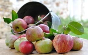 Картинка яблоки, урожай, ведро