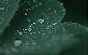 Картинка вода, капли, макро, лист, зеленый, роса