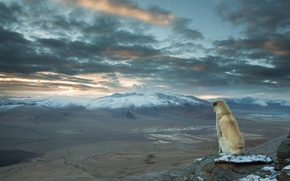 Картинка Dog, landscape, nature, mountains, clouds, snow, animal, valley