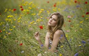 Картинка поле, лето, взгляд, девушка