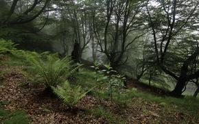 Картинка лес, деревья, папоротники