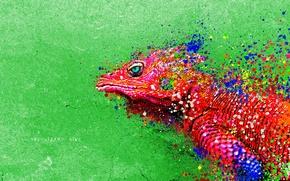 Обои цвета, картина, ящерица, Рептилия, яркость, игуана