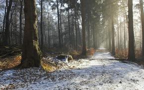 Картинка красота, утро, природа, зима, дорога, деревья, дымка, осень, лес