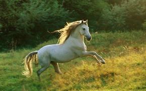 Обои бег, лошадь, луг