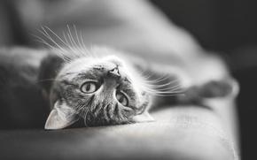 Обои усы, диван, черное, мордочка, белое, нос, глаза, кот