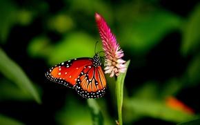 Обои лепестки, крылья, поле, сад, бабочка, цветок
