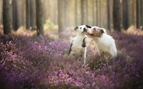 Картинка лес, собаки, друзья