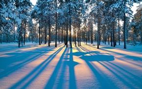 Картинка зима, лес, деревья, рассвет