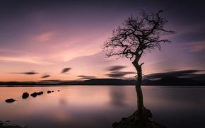 Картинка небо, облака, закат, горы, озеро, камни, дерево