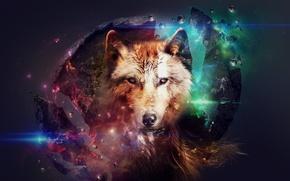 Картинка абстракция, животное, коллаж, волк, красивые картинки