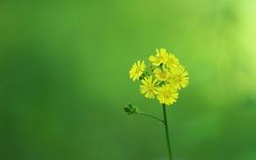 Картинка цветок, лепестки, стебель, соцветие