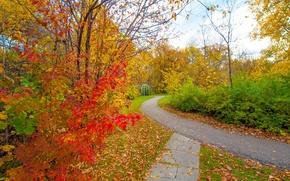Обои осень, листья, деревья, парк, дорожка, кусты, багрянец