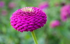 Обои бутон, природа, лепестки, цветок, стебель
