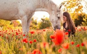 Картинка лето, девушка, природа, конь
