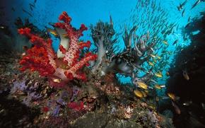 Картинка рыбки, природа, океан, кораллы, под водой