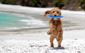 Обои море, пляж, фон, друг, widescreen, обои, игра, собака, мокрая, play, wallpaper, wet, beach, sea, широкоформатные, ...